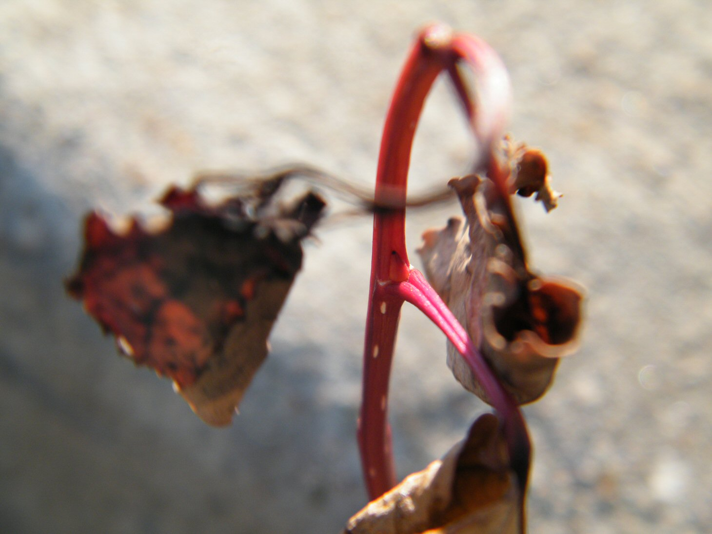 Macro Twig and Dead Leaves