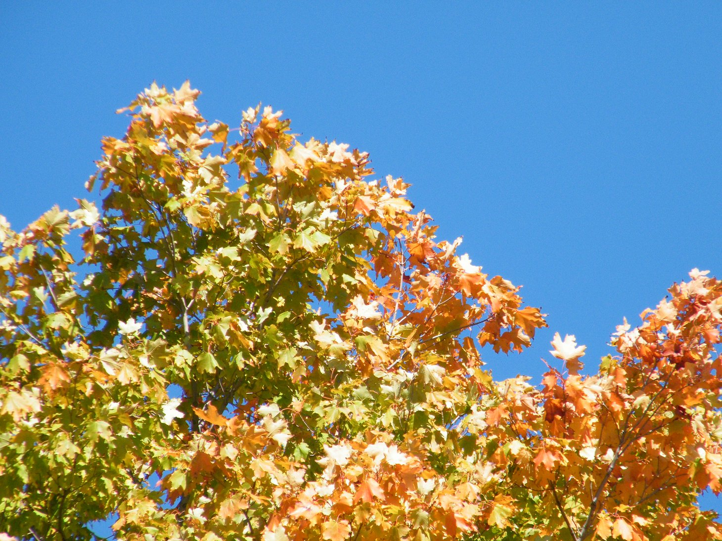 Macro Fall Leaves on a Beautiful Day