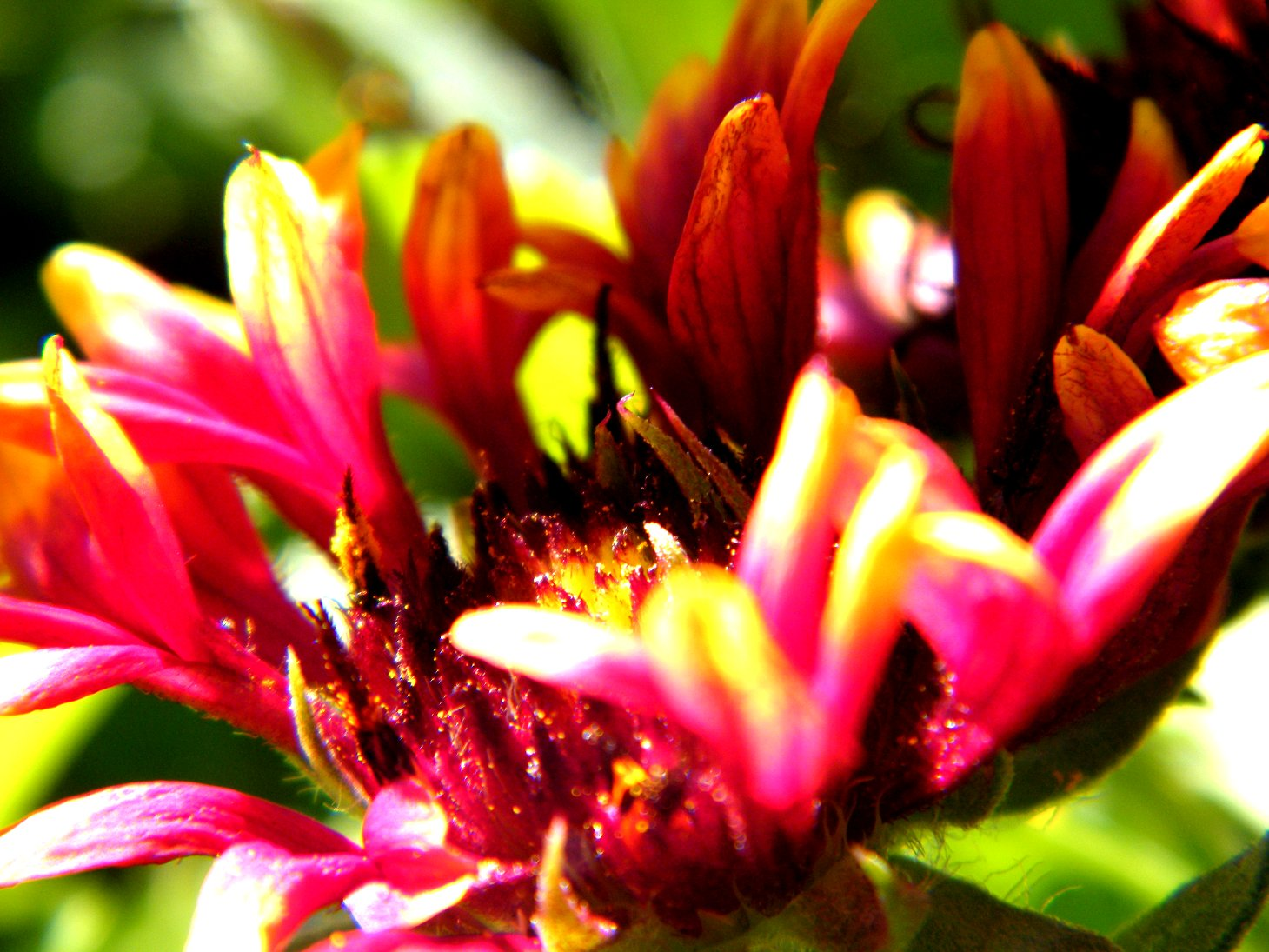 Macro Red and Orange Flower with Green Background