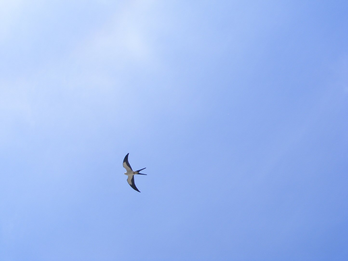 Bird Flying in Blue Skies
