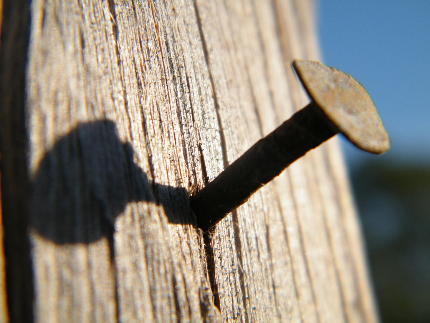 Macro Nail in the Wood