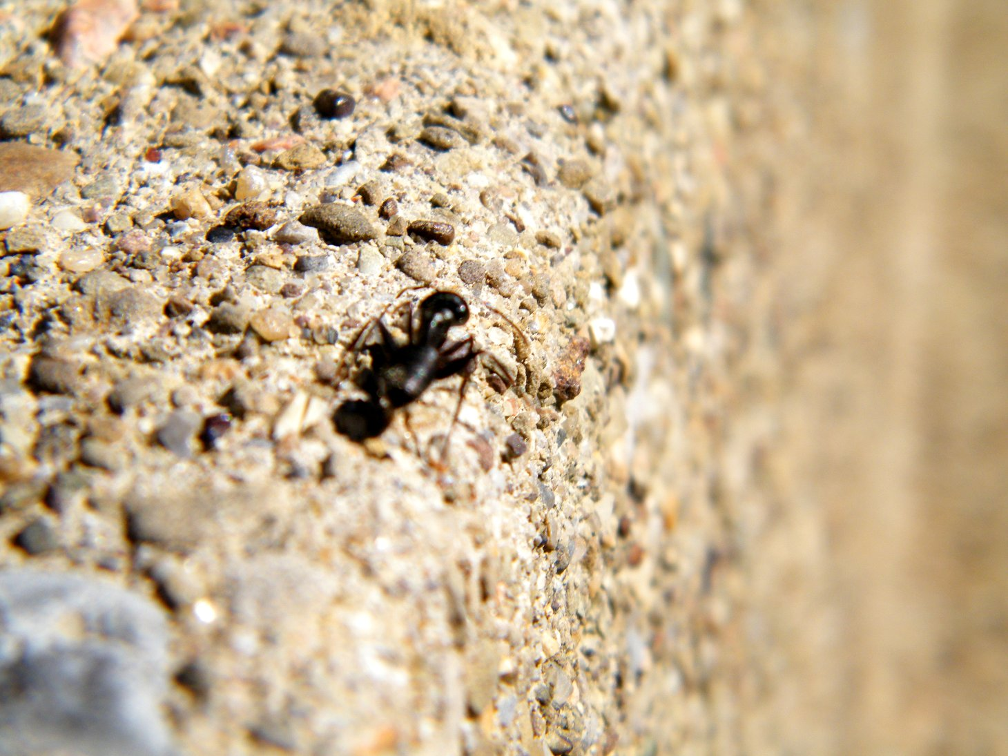 Macro Ant on a Step