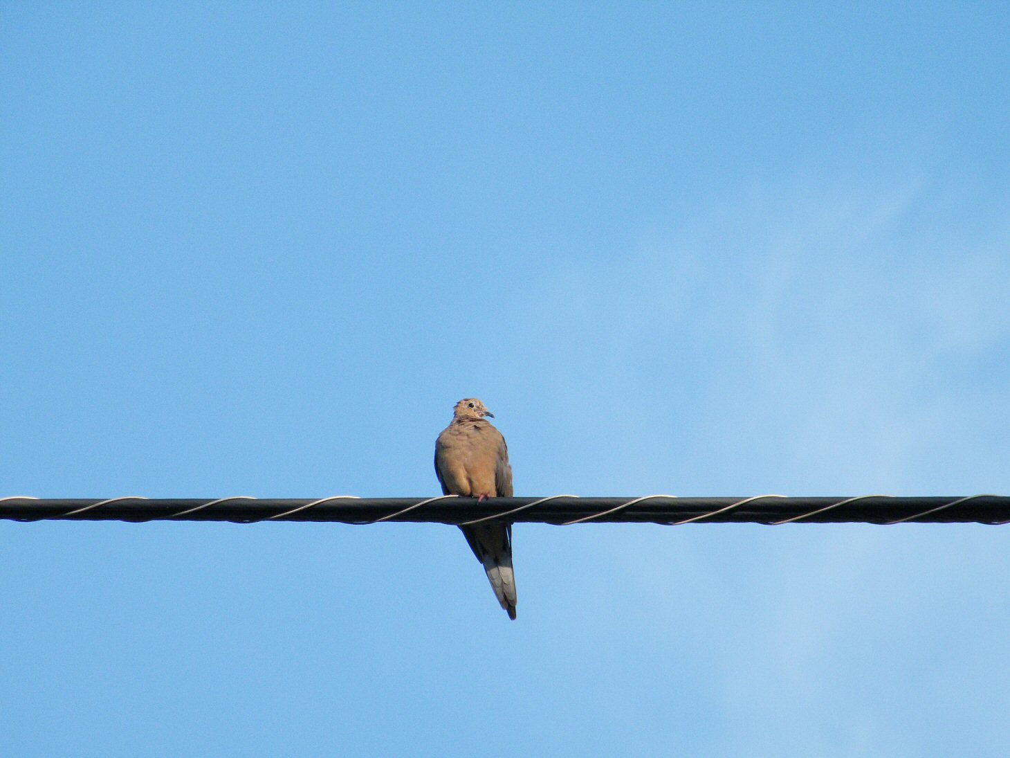 Pigeon on a Power Line in front of Blue Skies