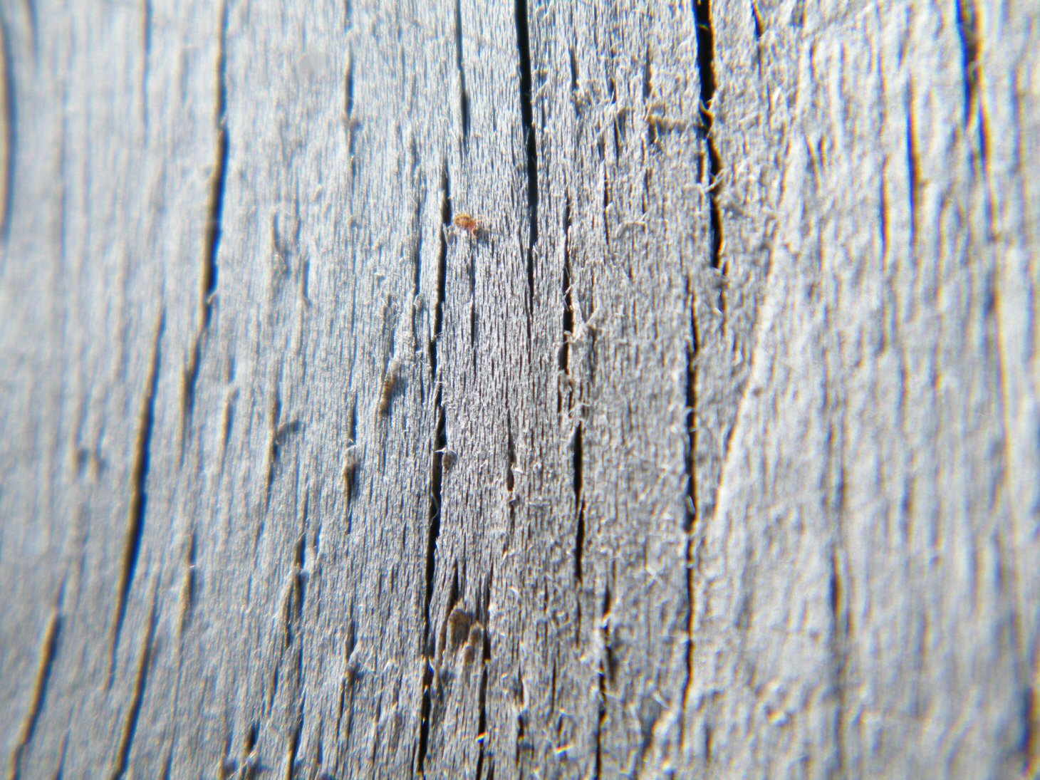 Macro Wooden Fence with Red Bug